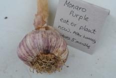 monaro_purple_garlic