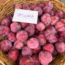 satsuma_plums